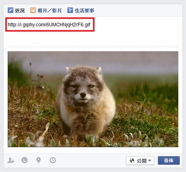 臉書Facebook正式支援GIF動畫圖片04